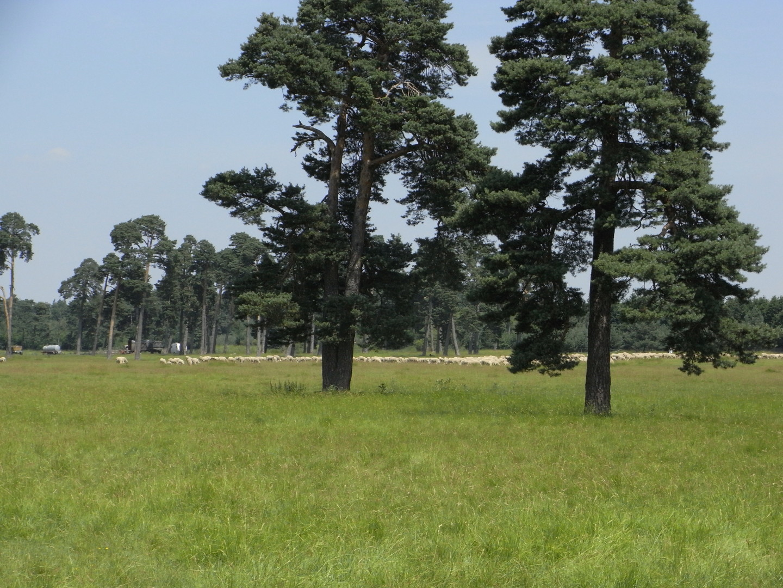 Naturschutzgebiet Panzerwiese, München