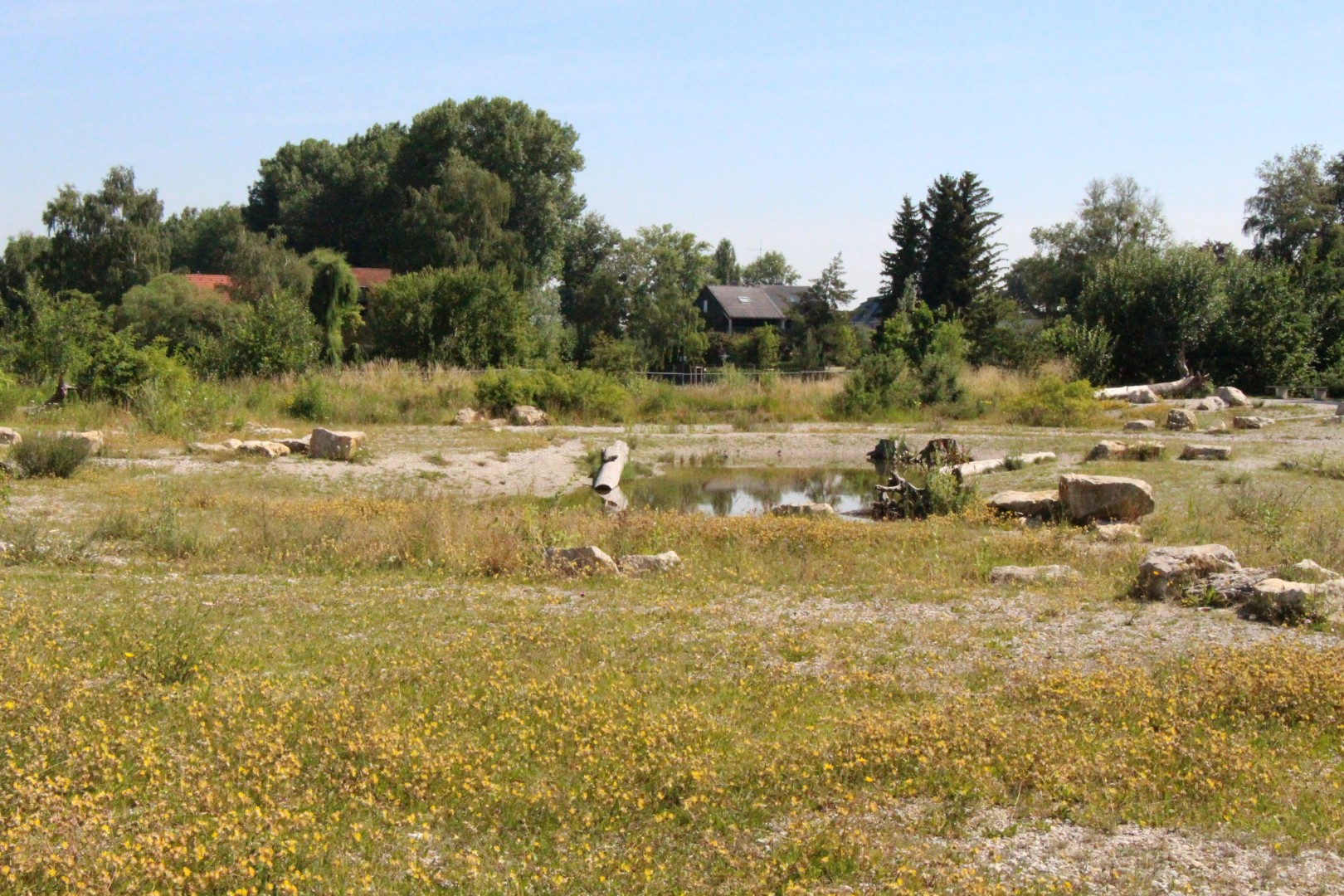 Ausgleichsfläche mit Zielart Wechselkröte (Bufo viridis), München-Fasanerie, Am Blütenanger