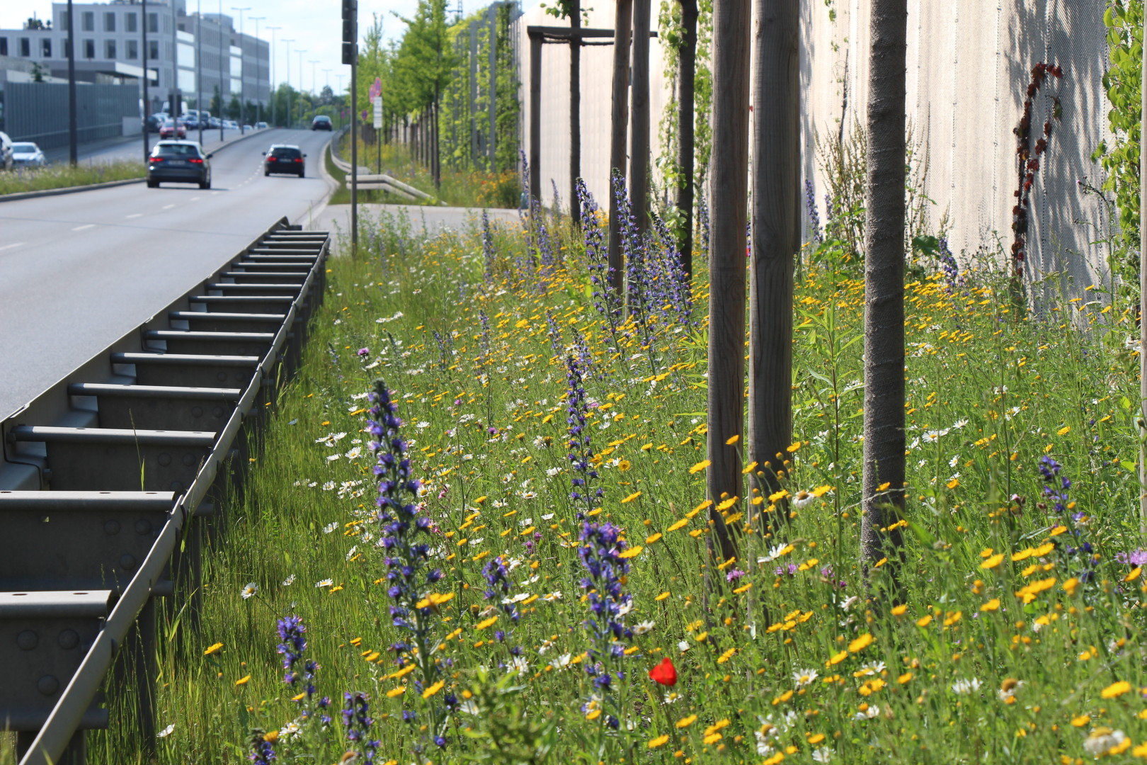 Verkehrsbegleitgrün - Nordumgehung Pasing