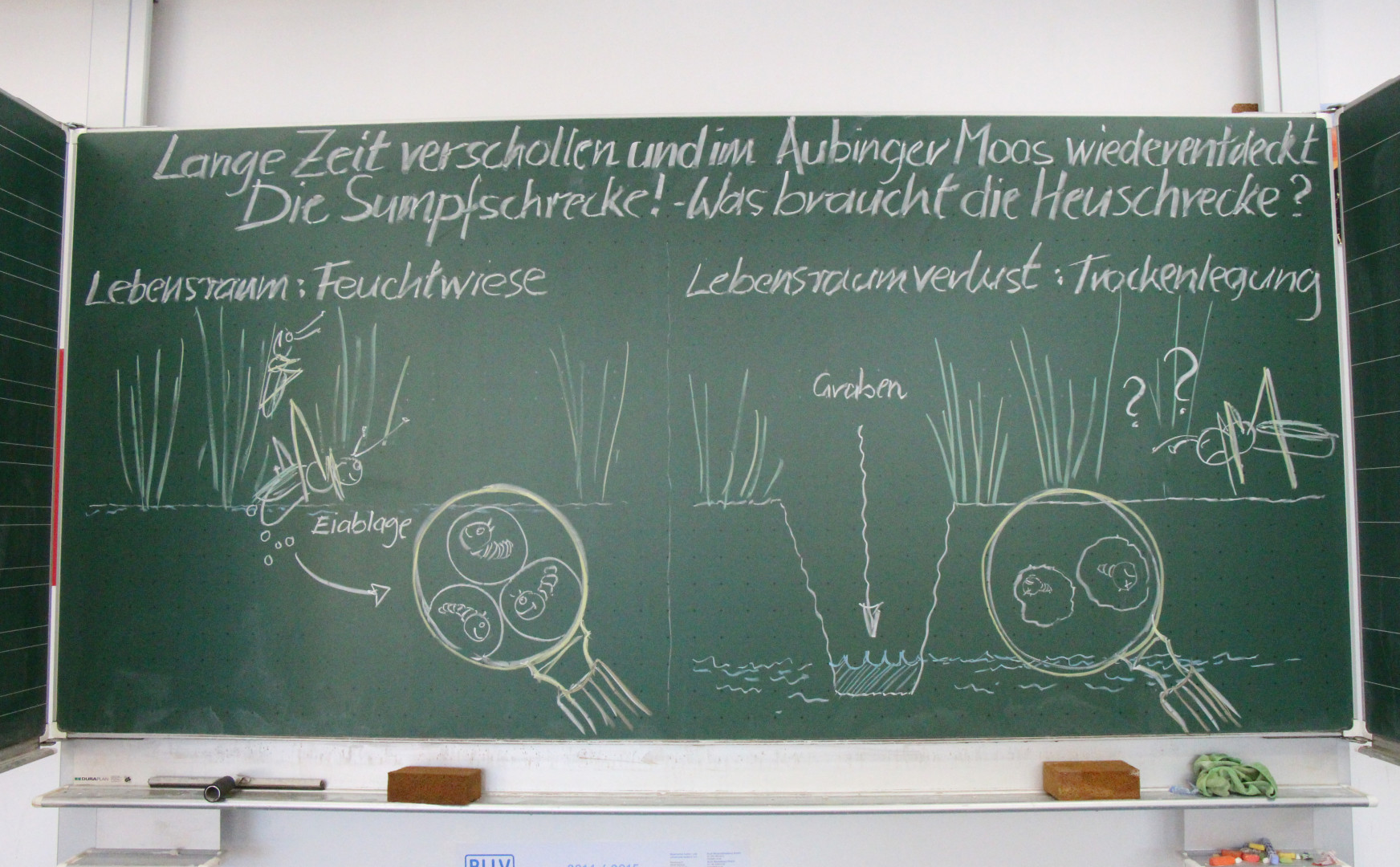 BayernNetzNatur, München, Aubinger Moos