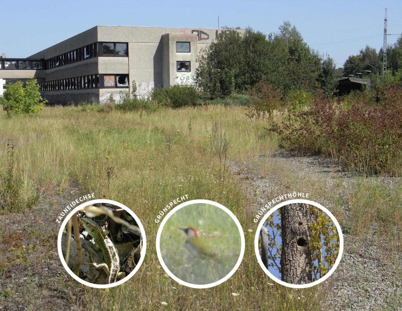 Spezielle artenschutzrechtliche Prüfung saP, München-Aubing, Aubing-Ost