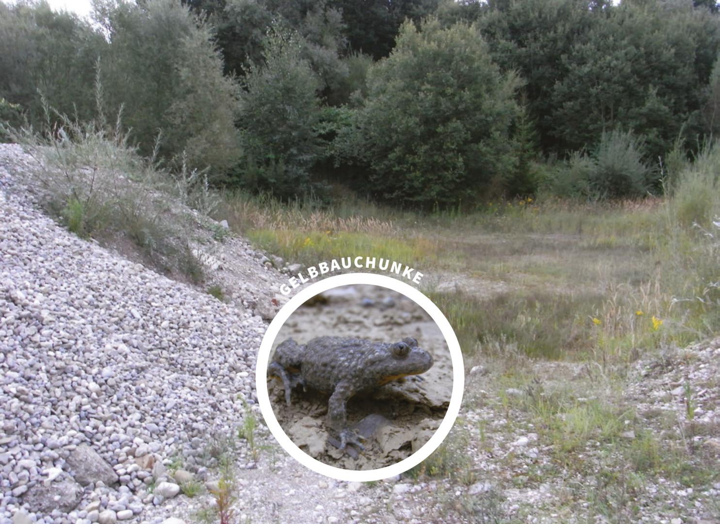 Spezielle artenschutzrechtliche Prüfung saP, Feldkirchen, Landkreis Bad Tölz
